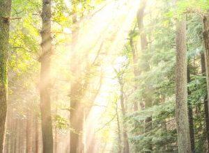Oplev hvordan du kan øve dig på Shinrin-Yoku, skovbadning